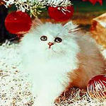 http://pics.druzya.org/avatars/31-12/16-150-009.jpg
