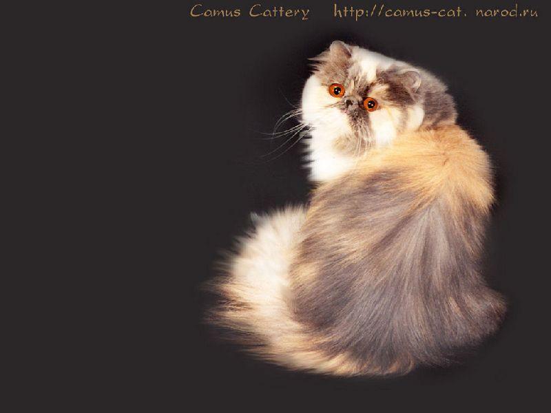 http://pics.druzya.org/wallpaper/ff/cat/.r-800/aquarel.jpg